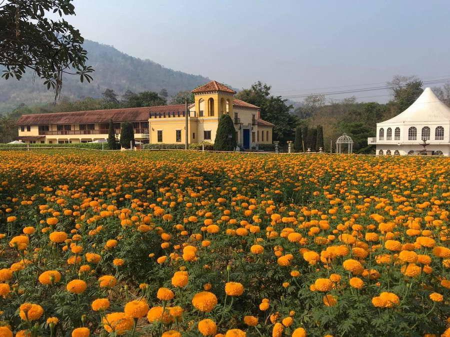 สวนดอกดาวเรืองสีเหลืองสดใส - คาซ่า เดอ ปันดาว