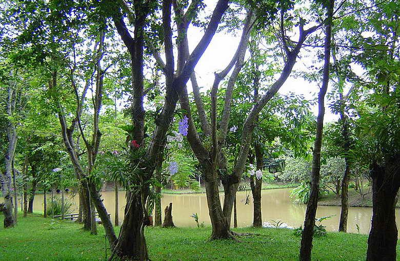 สวนป่าและสระขนาดใหญ่ - ชัชนาถ วู๊ดแลนด์ รีสอร์ท