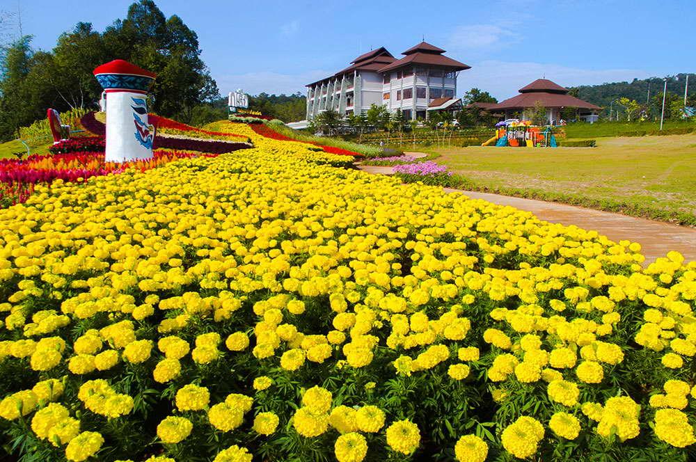 สวนดอกไม้สีสันสดใส - ภูเรือ แซงค์ฌัวรี รีสอร์ท แอนด์ สปา