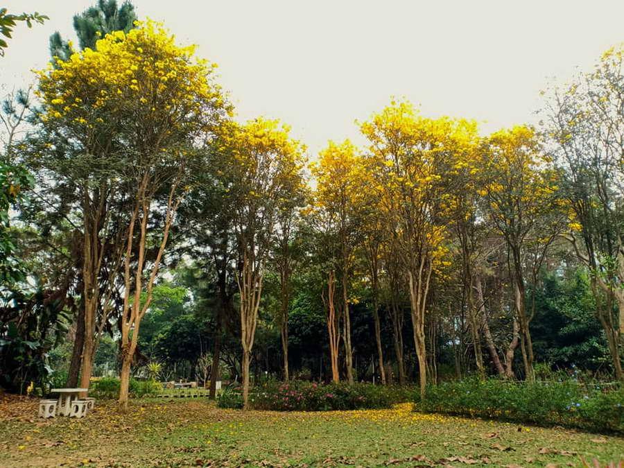 สวนไม้ยืนต้นให้ความร่มรื่น - ฟาร์ม แอนด์ สเตย์ บาย ไร่สนสีแสด