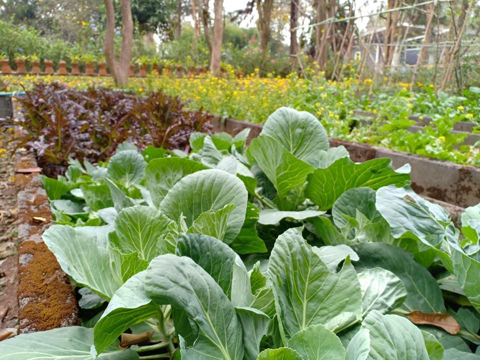 สวนผักออแกนิค - ฟาร์ม แอนด์ สเตย์ บาย ไร่สนสีแสด